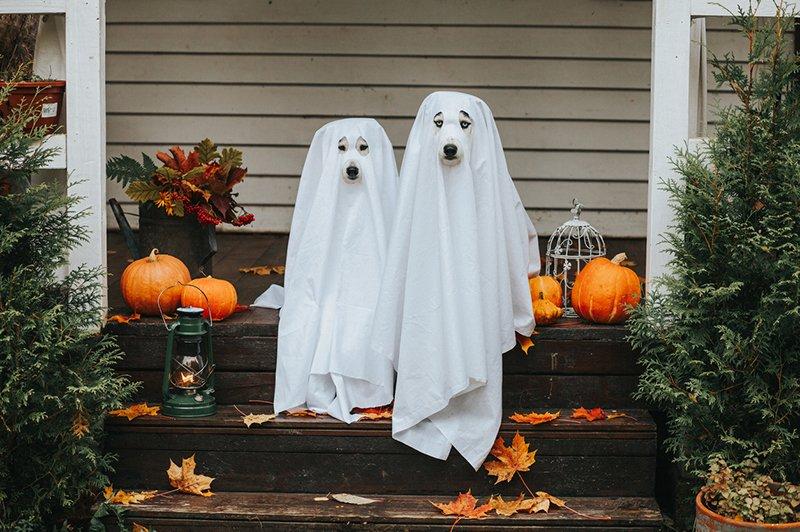 halloween ghost dogs